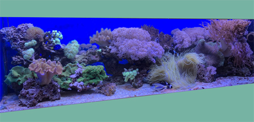 аквариум на заказ по индивидуальным размерам