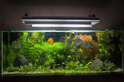 аквариум под заказ в Москве