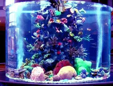Цилиндрические аквариумы